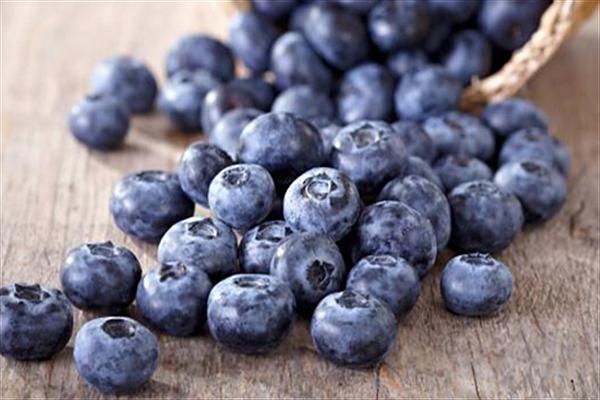蓝莓.png