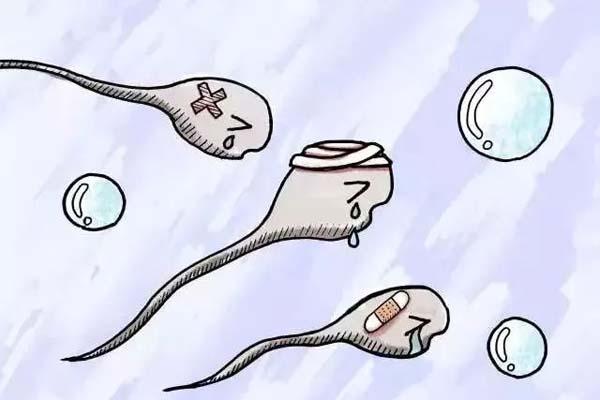 卵泡.jpg