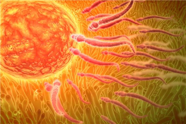卵子多久成熟?怎么提高卵子质量?